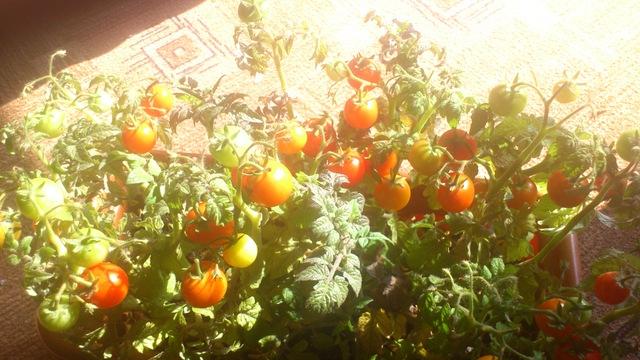 Darbi dārzā DSC-0322.sized